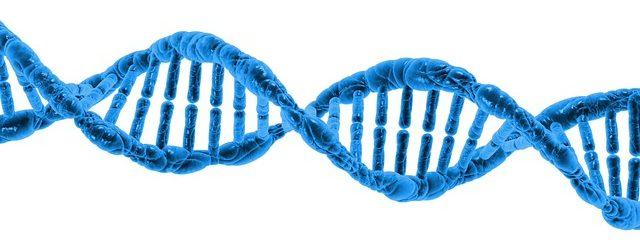 DNA esempio