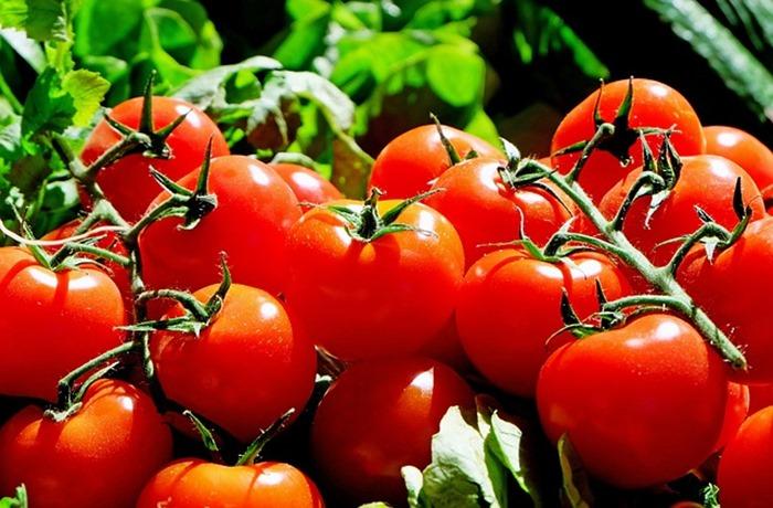 pomodori-frattura